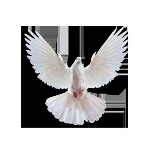 white dove release colorado home