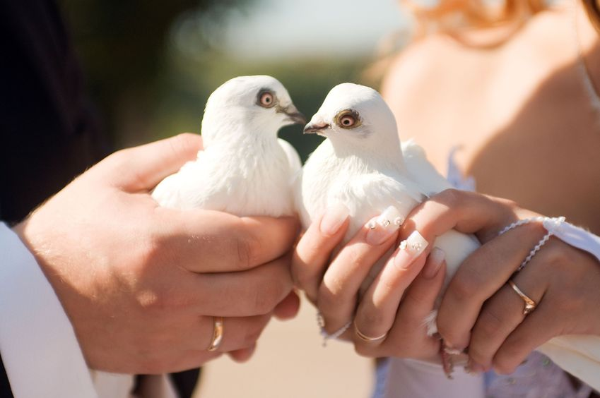Bride and Groom's Arms Holding White Doves