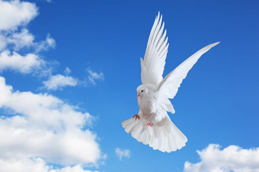 A Dove Flies Through the Clouded Skies