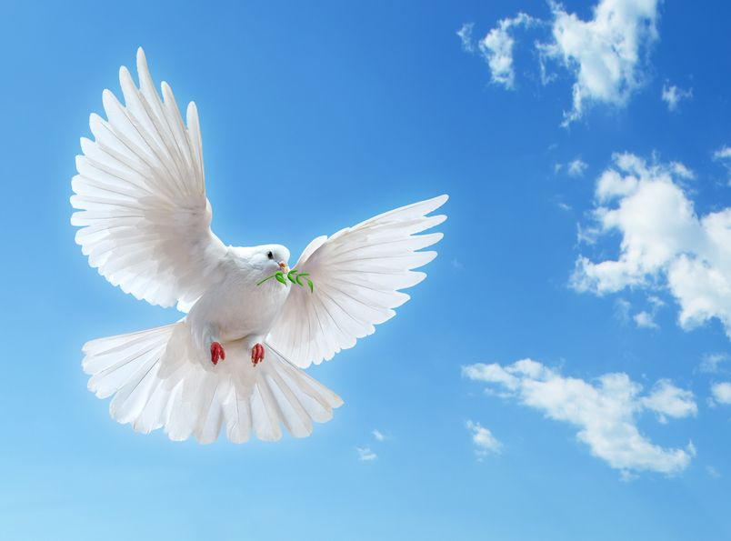 Dove in The Air with Wings Wide Open in Front of the Sun