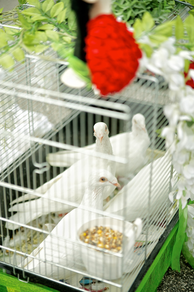 Doves Waiting for Wedding Ceremony