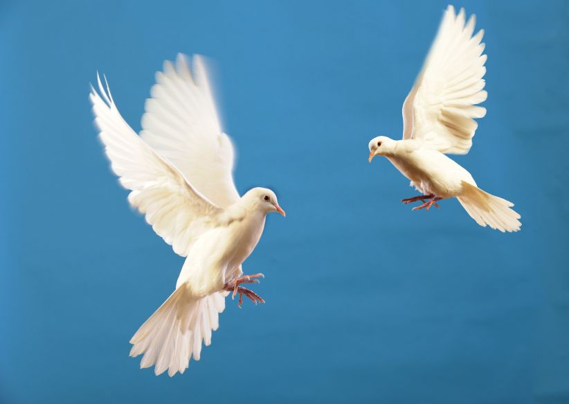 Flying White Doves Isolated On a Blue Background