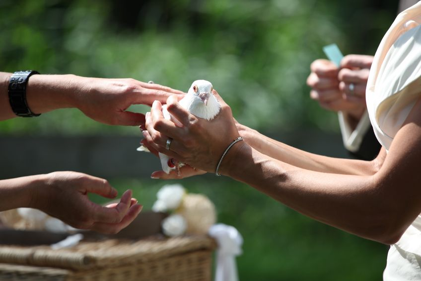 Wedding Dove in Hand of the Bride Just Before the Fly